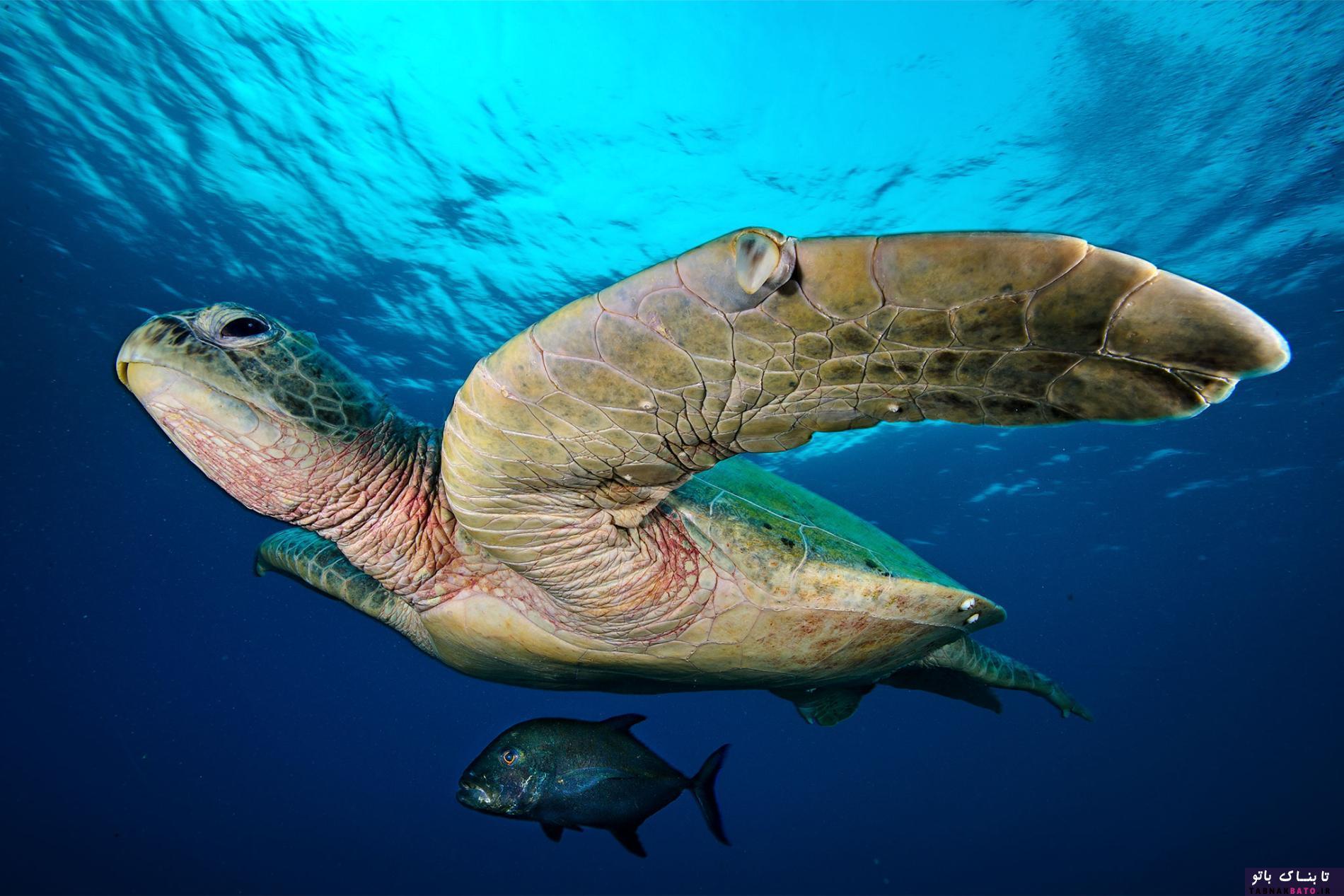 عکس هایی دیدنی از قلب مرجانی فیلیپین